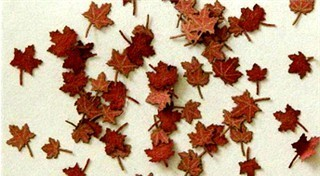 Maple leaves (c. 60pcs.) - Dry