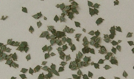 Birch leaves (c. 80pcs.) - Green