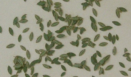 Universal leaves (c. 160pcs.) - Green