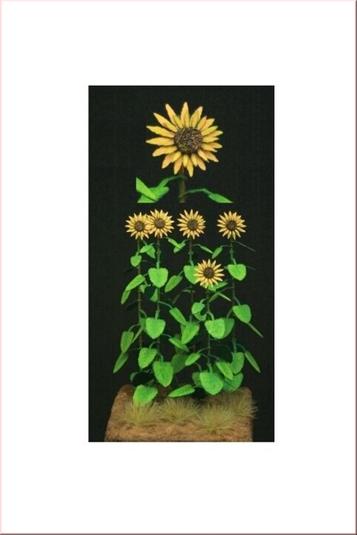 GL085 Sunflowers