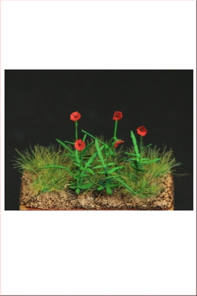 Poppy Plants - 21pcs.