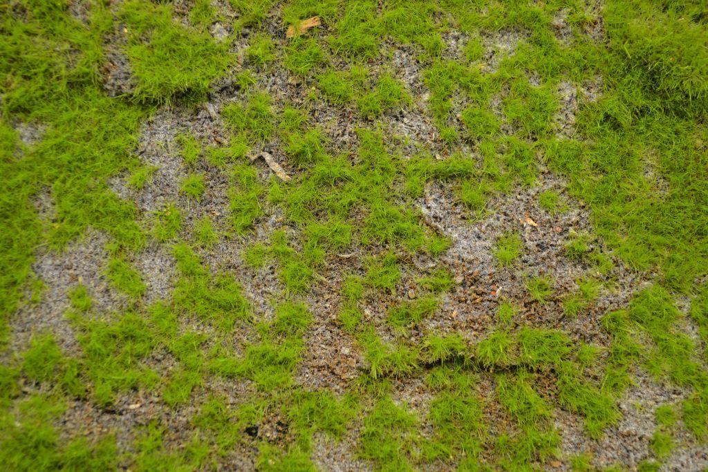 wild grass texture. Wild Grass Type 1 Wild Grass Texture