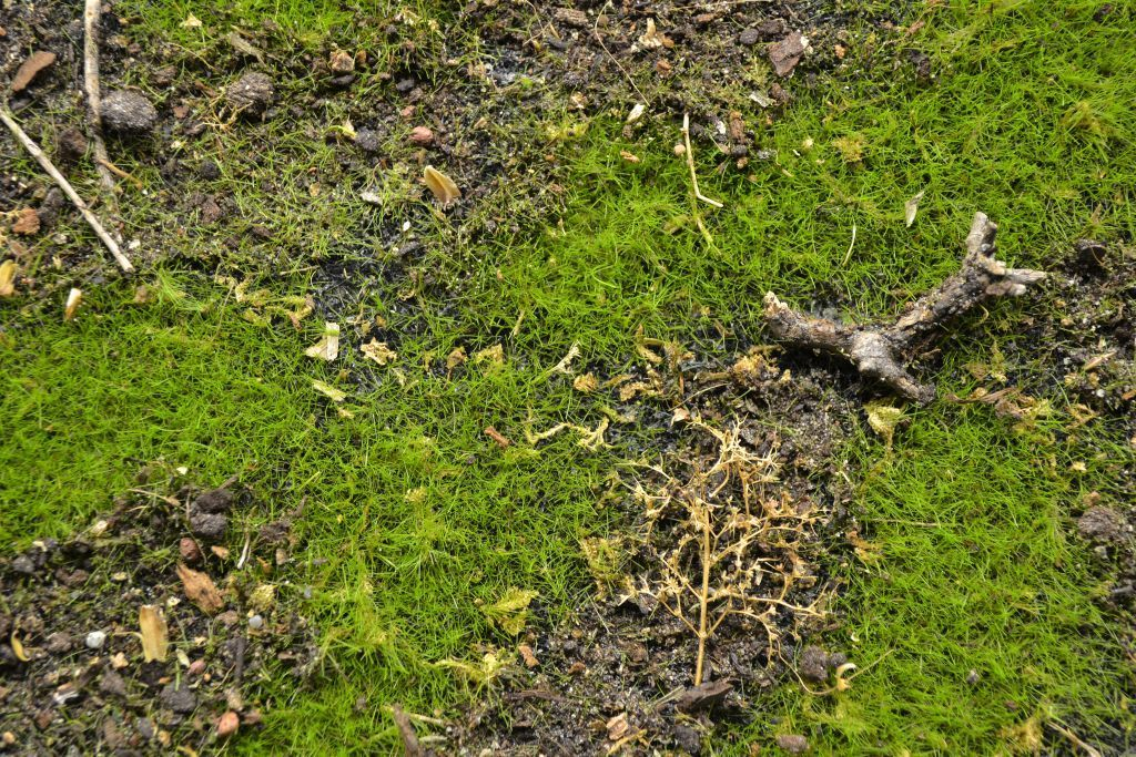 Forest floor reality in scale for Forest floor definition