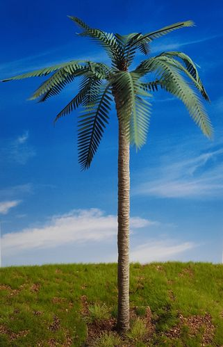 Common Palm – Jungle, Pacific, Desert, Mediterranean